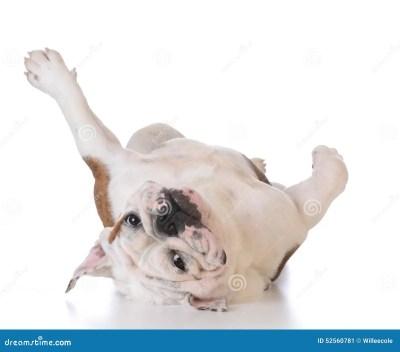 Itchy Dog Stock Photo - Image: 52560781