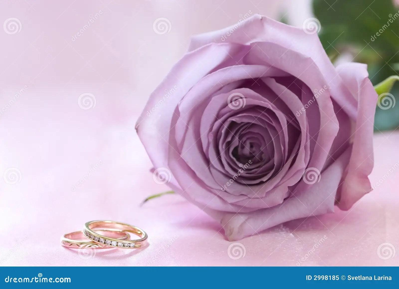 royalty free stock photo purple rose wedding rings image rose wedding ring Purple rose and wedding rings