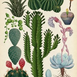 The Botanical Drawings of Katie Scott