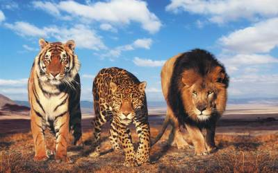Tiger And Lion Wallpapers Group (77+)