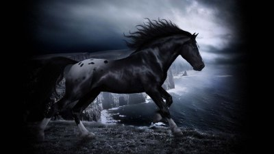 Cool Horse Wallpapers Group (75+)