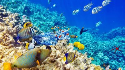 Coral Reef 4K Wallpapers - Top Free Coral Reef 4K Backgrounds - WallpaperAccess