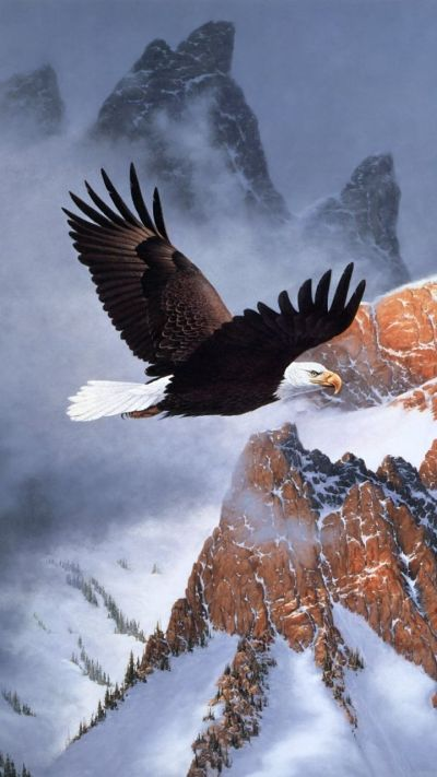 American Eagle Wallpapers - Top Free American Eagle Backgrounds - WallpaperAccess