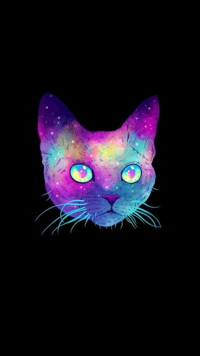 Cool Cat Wallpapers - Top Free Cool Cat Backgrounds - WallpaperAccess