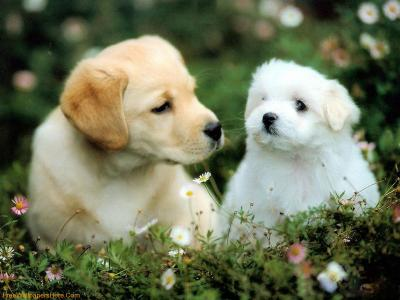 Cute Dogs And Puppies Wallpapers - Wallpaper Cave