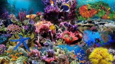 Aquarium Backgrounds Pictures - Wallpaper Cave