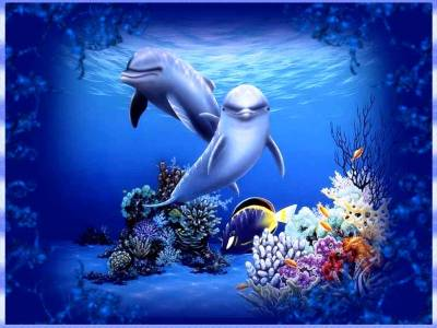 Free Dolphin Wallpapers For Desktop - Wallpaper Cave