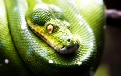 Cool Snake Wallpapers - Wallpaper Cave