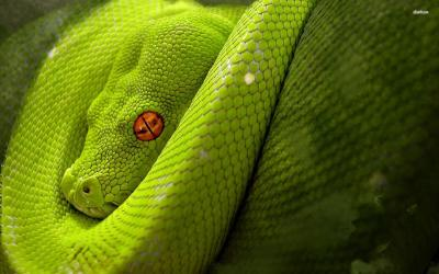 Cool Snake Backgrounds - Wallpaper Cave