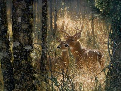 Free Deer Wallpapers - Wallpaper Cave