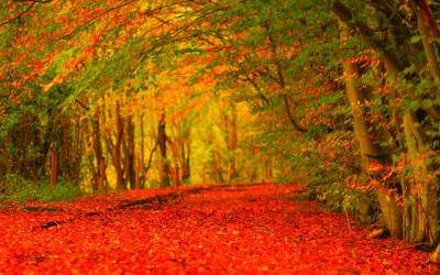 Autumn HD Wallpapers - Wallpaper Cave