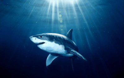 HD Shark Wallpapers - Wallpaper Cave