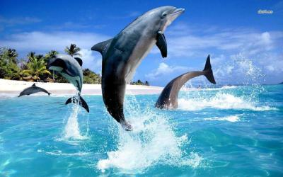 Dolphins Wallpapers - Wallpaper Cave