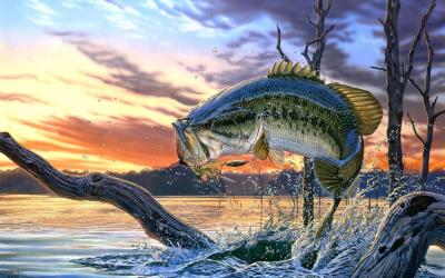 Bass Fishing Wallpaper Backgrounds - Wallpaper Cave