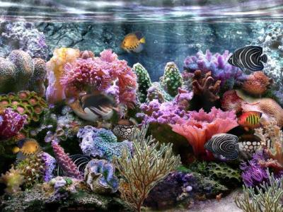 Coral Reef Wallpapers - Wallpaper Cave