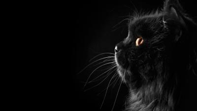 Wallpapers Black Cat - Wallpaper Cave