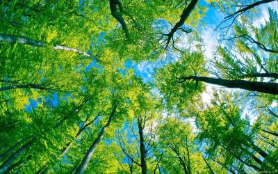Cool Tree Backgrounds - Wallpaper Cave