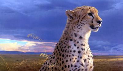 Cheetah Wallpapers HD - Wallpaper Cave