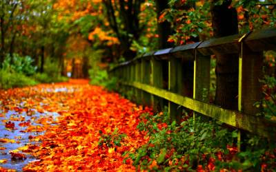 Autumn Wallpapers HD - Wallpaper Cave