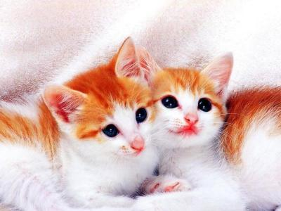 Free Cute Kitten Wallpapers - Wallpaper Cave