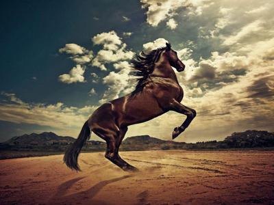 Horse Wallpapers - Wallpaper Cave