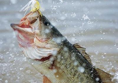 Bass Fishing Wallpaper Backgrounds - Wallpaper Cave
