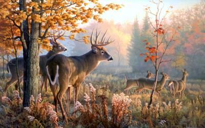 Deer Desktop Wallpapers - Wallpaper Cave