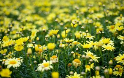Yellow Flower Wallpapers - Wallpaper Cave