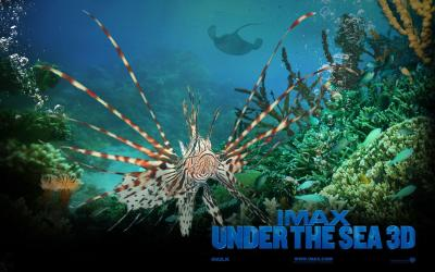 Under The Sea Wallpapers - Wallpaper Cave