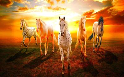 7 Horse Hd Wallpapers 1920x1080 Download - andro wall