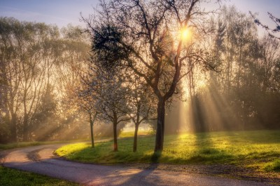 Sun Shining Through Trees | NATURE