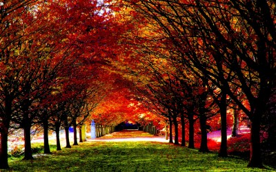 Fall HD Wallpapers