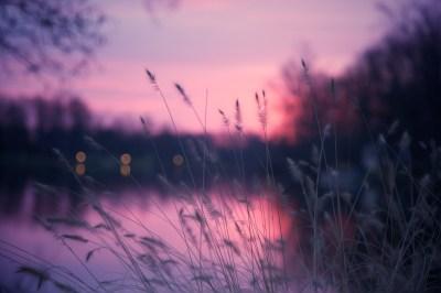 Wallpaper Lake, 4k, HD wallpaper, grass, sunset, purple, Nature #5173