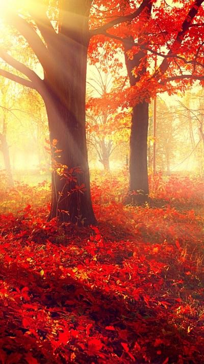 Wallpaper park, 5k, 4k wallpaper, autumn, beautiful, leaves, trees, Nature #12401