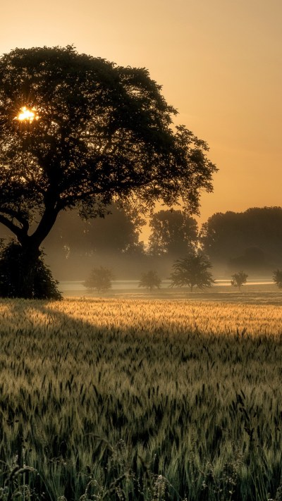 Wallpaper sunset, tree, field, 4K, Nature #19413