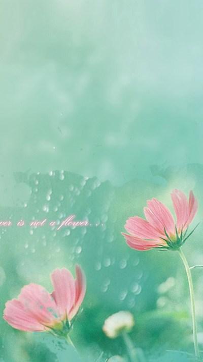 Simple Mist flower HD Wallpaper iPhone 6 plus - wallpapersmobile.net