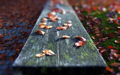 Fallen Leaves Close-up wallpapers | Fallen Leaves Close-up stock photos