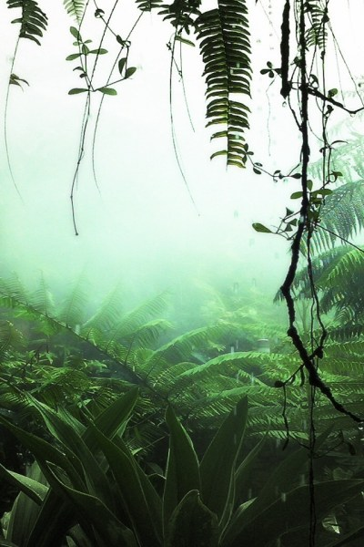 640x960 Jungle Plants Iphone 4 wallpaper