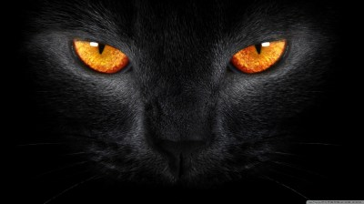 Black Cat HD desktop wallpaper : High Definition : Fullscreen : Mobile - Desktop Wallpaper HD ...