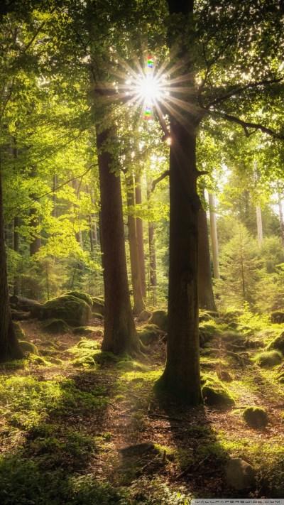 Sun Rays Through Trees 4K HD Desktop Wallpaper for 4K Ultra HD TV • Wide & Ultra Widescreen ...