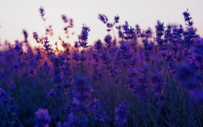 Purple background Tumblr ·① Download free stunning full HD backgrounds for desktop, mobile ...