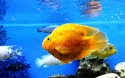 Cool Fish Backgrounds ·① WallpaperTag