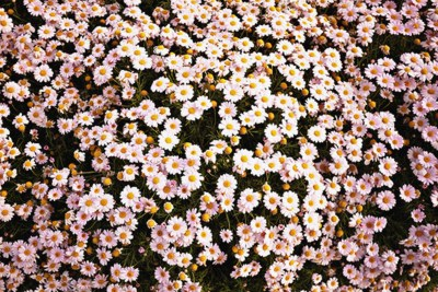 Black Floral Background Tumblr ·① WallpaperTag