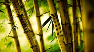 Bamboo Desktop Wallpaper ·①