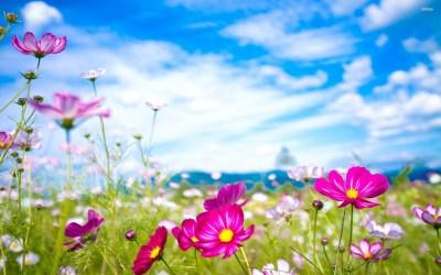 Flower Desktop Backgrounds ·① WallpaperTag