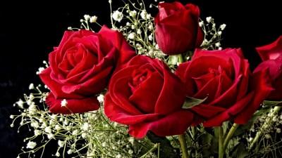 Roses Wallpaper for Desktop ·①
