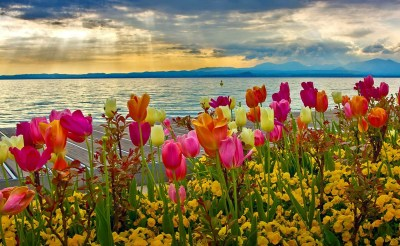 45+ Spring desktop backgrounds ·① Download free amazing backgrounds for desktop and mobile ...