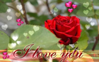 L Love You Wallpaper ·① WallpaperTag