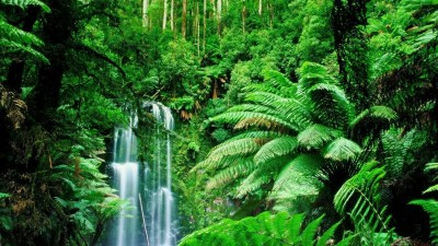 Amazon RainForest Wallpaper ·① WallpaperTag