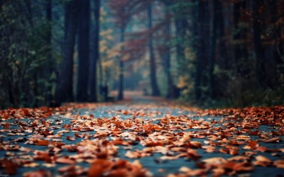 71+ Fall backgrounds Tumblr ·① Download free cool HD backgrounds for desktop, mobile, laptop in ...